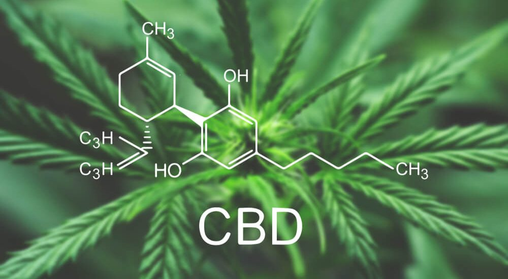 Cannabis CBD Hemp Oil