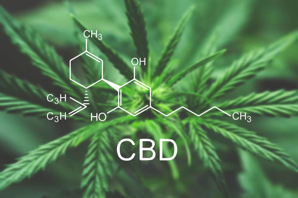 Cannabis CBD Hemp Oil