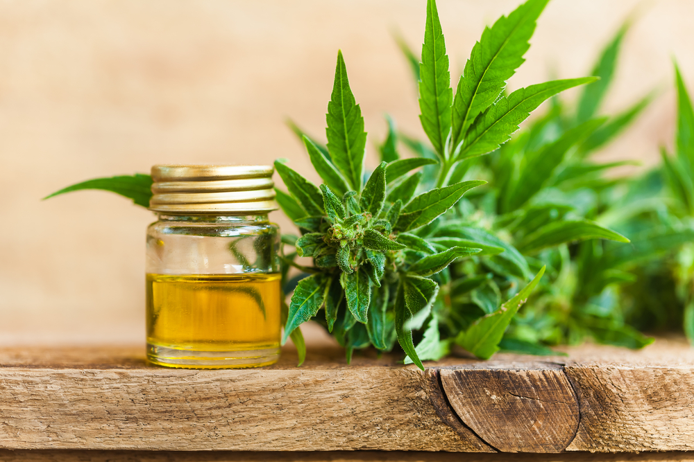 Reasons Why CBD Terp Sauces Are Becoming the Trend