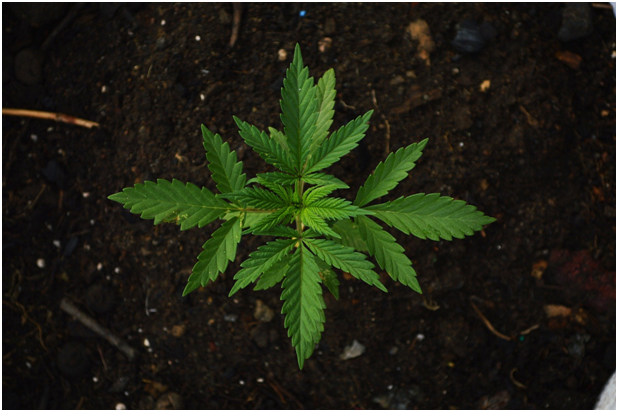 Myths About Buying Weed